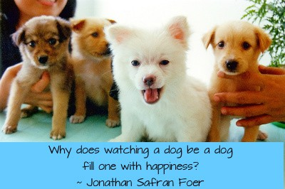 Does Owning a Dog Make You Happy?