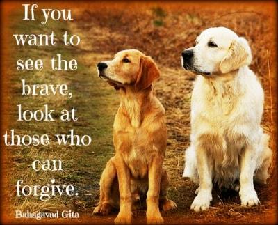 forgiving yourself dog protection