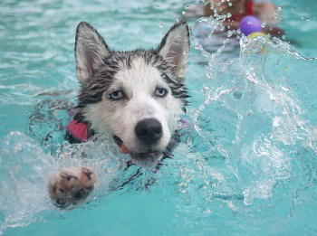 dog swimming lessons