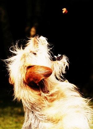 dog food allergies symptoms