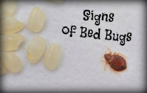 bed bug signs treatments