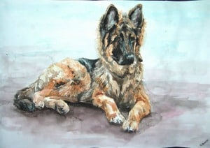german shepherd hip dysplasia