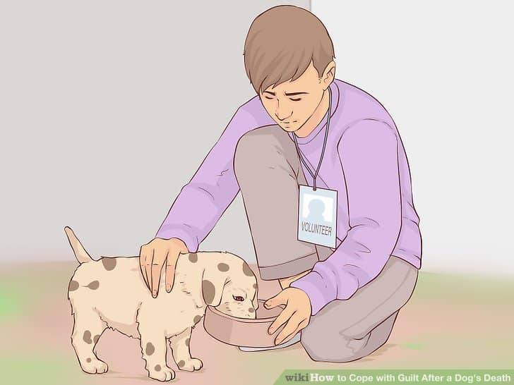 Dealing With Guilt When You Caused Your Pet's Death